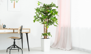 Plante artificielle - Ficus enlacé