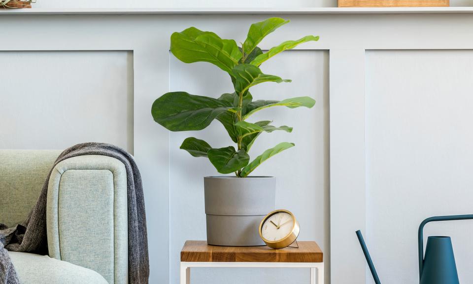 Plante artificielle - Ficus Lyrata